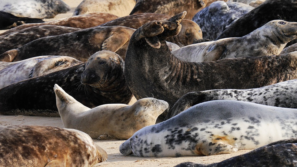See the seals in Thanet!